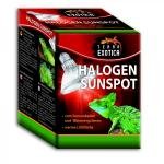 Halogen Sunspot - Halogen Spotstrahler 50 Watt