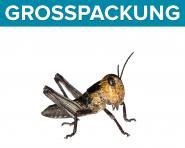 Wanderheuschrecken Heuschrecken klein 50 Stück