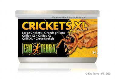 Exo Terra Dosenfutter Grillen XL