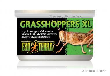 Exo Terra Dosenfutter Heuschrecken XL