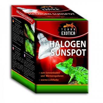 Halogen Sunspot - Halogen Spotstrahler 50 Watt