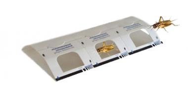 30 Stück Insekten Klebefalle mit integriertem Lockstoff