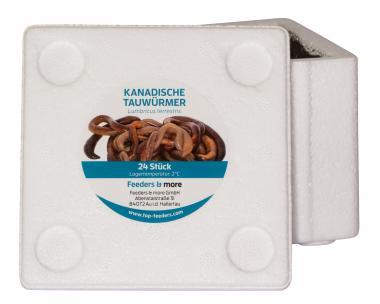 Kanadische Tauwürmer Angelköder *DAS ORIGINAL* 24 Stück in der Styrobox