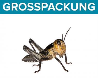 Wanderheuschrecken Heuschrecken klein 100 Stück