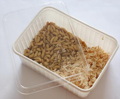 Bienenmaden Wachsmaden 500 Stück