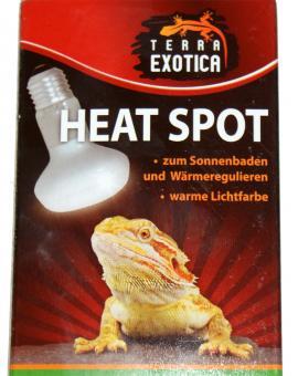 Terra Exotica Heat Spot