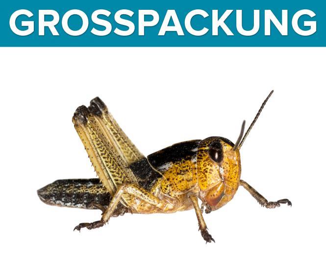Wanderheuschrecken Heuschrecken mittel 50 Stück
